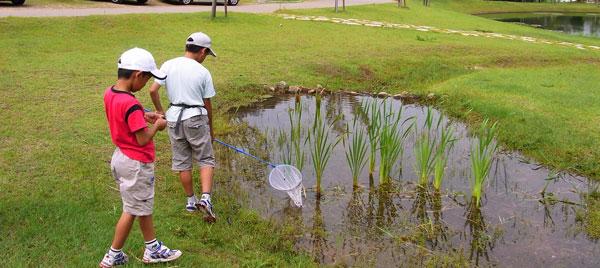 ハイイロゲンゴロウのいた水たまり