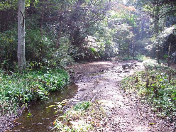 散在ガ池森林公園 | 虫散歩