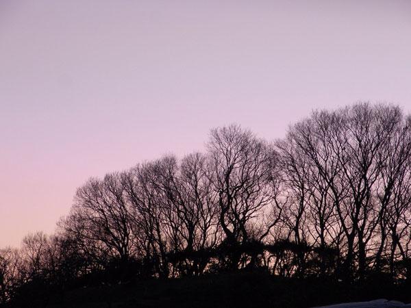 夕方の雑木林