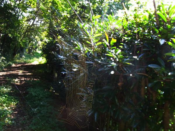 ビジョオニグモの網