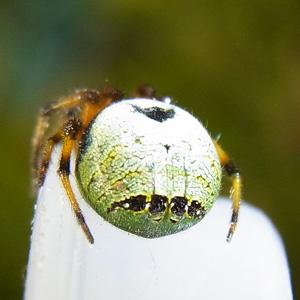 ビジョオニグモ