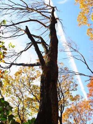 キノコの生えた枯れ木