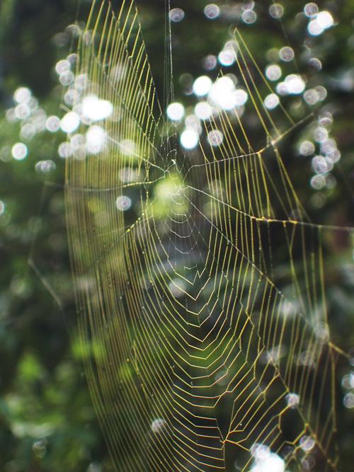ビジョオニグモの切れ網