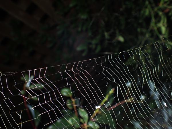 網の切れ目