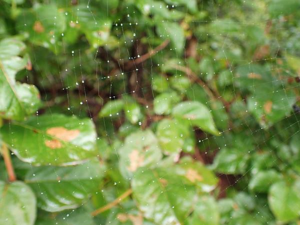 雨粒のついた網