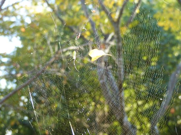 午前中に全て修復した網
