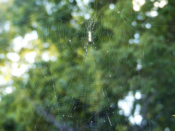 午前<br /> 中に全て修復した網