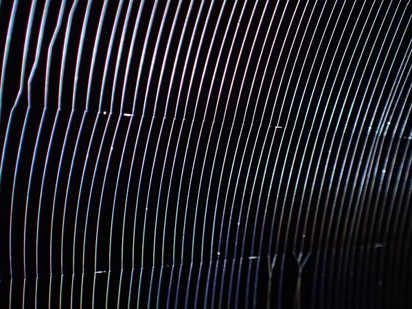 目が細かいゲホウグモの網
