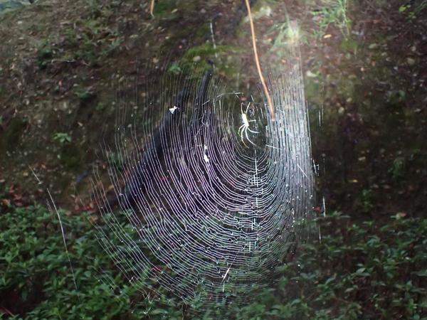 ジョロウグモの網