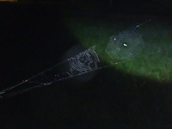ジョロウグモの網の中にできた小さい網