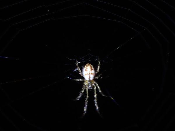 網にいたクモ