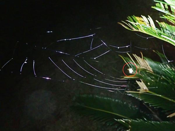 トリノフンダマシの網