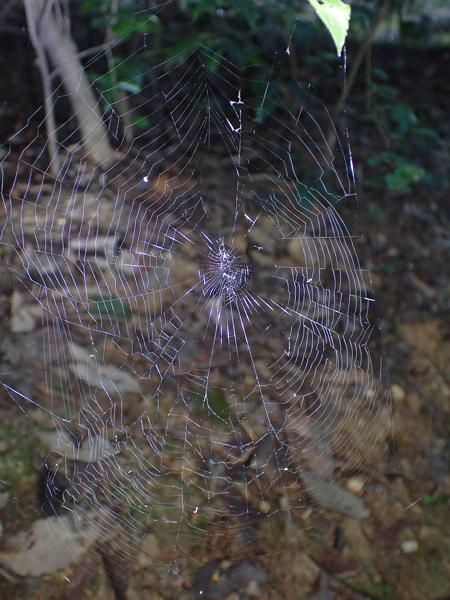 ゴマジロオニグモの網