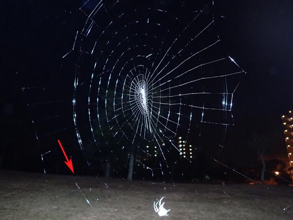 足場糸を張るゲホウグモ