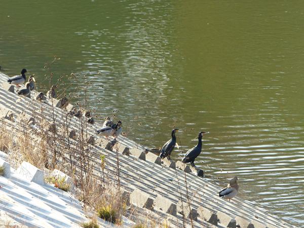 水鳥が日向ぼっこ