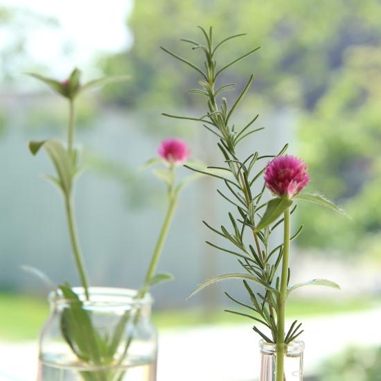 花壇で育った植物...