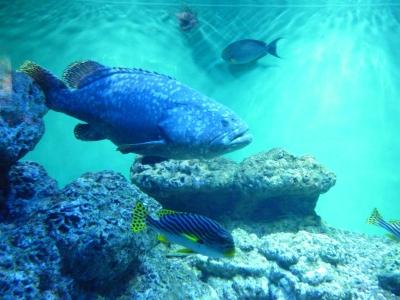 立派な魚.JPG