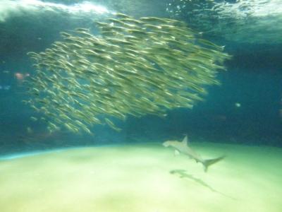 小さな魚の群れ.JPG