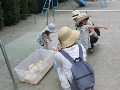 1706ふれあい動物園 (4).JPG