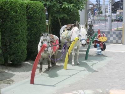 1706ふれあい動物園 (6).JPG