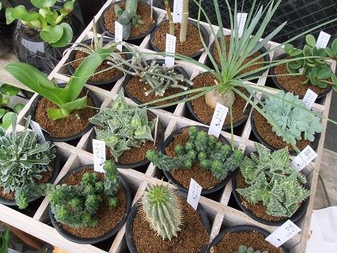 レアな植物