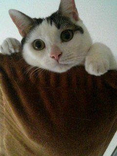 「プラエ 猫」の画像検索結果