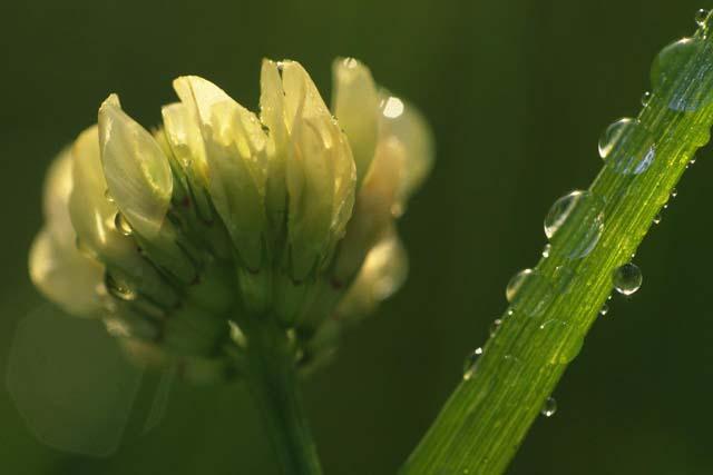 水滴のついた花