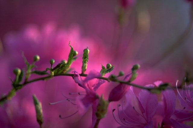 花とつぼみ.jpg