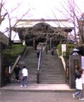 乗蓮寺山門