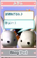 うさびとみかん111204