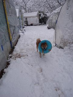雪の中.jpg