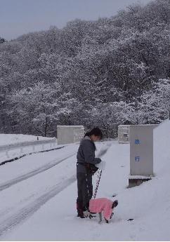 雪の中の散歩.jpg