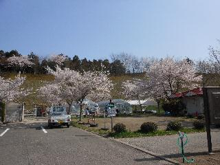 桜全景.jpg