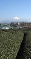 3月15日ふたたび雪化粧の富士山