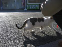 浜名湖サービスエリア(下り)のネコちゃん