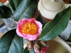 足久保のお茶の赤い花