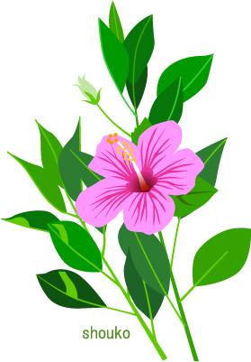 ハイビスカスの花の無料イラスト フリー素材 夏の花
