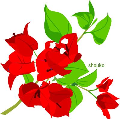ブーゲンビリア 夏の花のイラスト 南国の花 無料素材