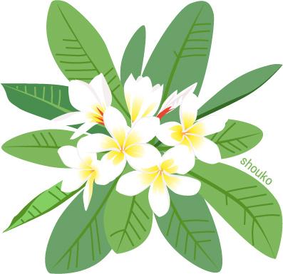 プルメリアの花の無料イラスト フリー素材 夏の花