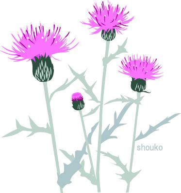 アザミ 花のイラスト 無料素材