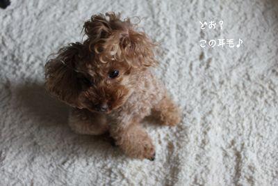 IMG_1365ふぇ.jpg