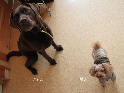 ジェル&琥太