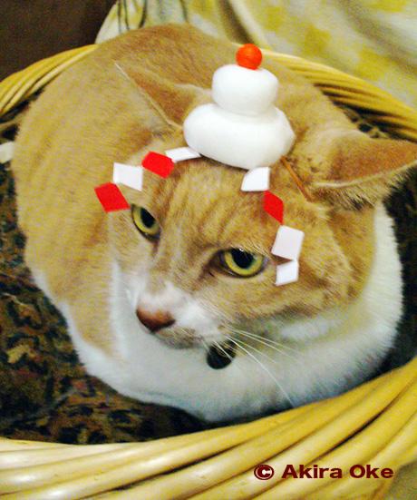 猫 年賀 イラスト 桶あきら
