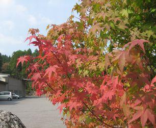 紅葉も始まりました