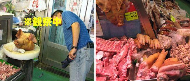 豚を観察するだんな。