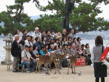 団体さんは鹿とお写真
