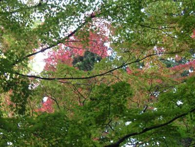 華厳寺の紅葉はまだでした