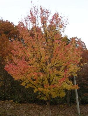 人気者の木