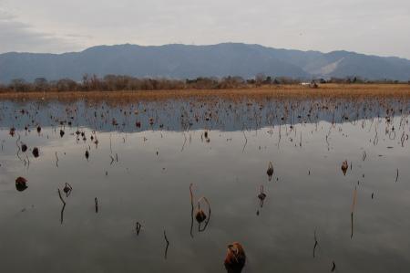 アクアワールドの池