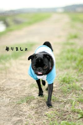 お散歩しよっか。